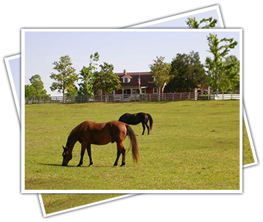 Horse Property Real Estate